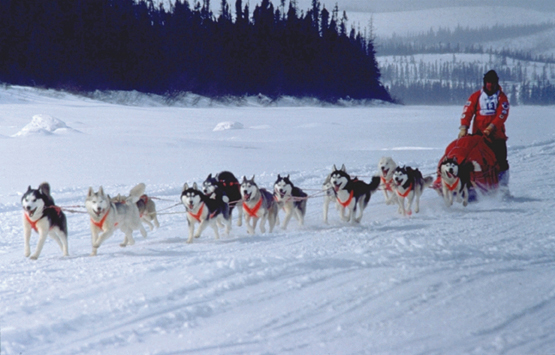 Tracking for dogsled race events using SPOT satellite unit